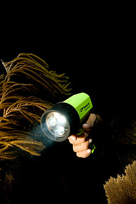 Scuba diver holds underwater light - p3433700 by Stephen Frink