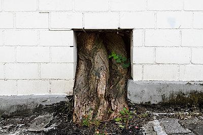 Stadtbaum - p417m2076096 von Pat Meise