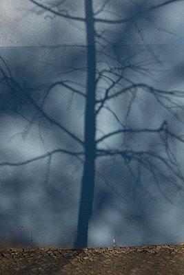 Schatten eines Baums auf blauer Hauswand - p627m1035430 von Christian Reister