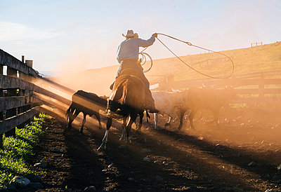 Cowboy on horse lassoing bull, Enterprise, Oregon, United States, North America - p924m1513599 by Pete Saloutos