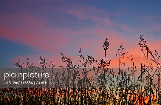 Grasses - p1312m2116854 by Axel Killian