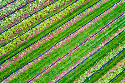 Germany, aerial view of plantation with apple trees in spring - p300m1587070 by Stefan Schurr