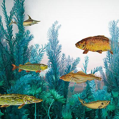 Unterwasserwelt - p415m2122091 von Tanja Luther