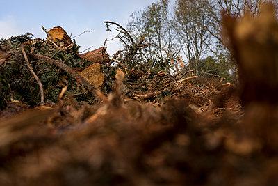 Deforestation - p445m1496603 by Marie Docher