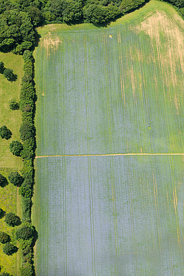Purple & Green crop aerial view - p1048m1069191 by Mark Wagner