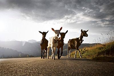 On the road - p1980181 by David Breun