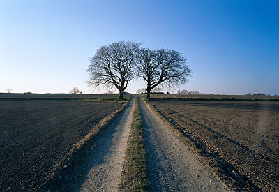 Two lonely trees. - p575m1075197f by Dick Clevestam