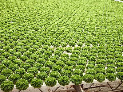 Monoculture - p1188m1002833 by Henk Wildschut