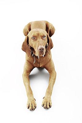 Dog collar - p4030583 by Helge Sauber