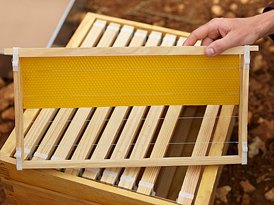 Imker mit neuem Bienenstock - p885m1215534 von Oliver Brenneisen