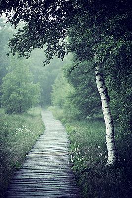 Wooden path - p992m1045230 by Carmen Spitznagel