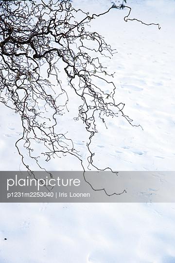 Haselstrauch im Schnee - p1231m2253040 von Iris Loonen