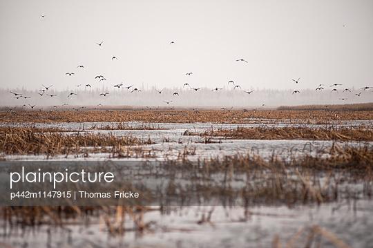p442m1147915 von Thomas Fricke