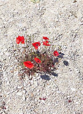 Blümchen am Strand - p1229m2090436 von noa-mar
