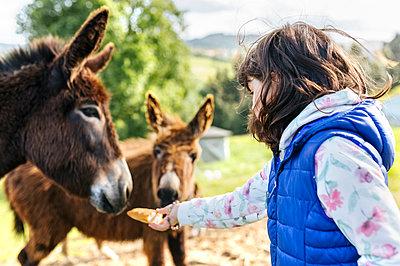 Little girl feeding donkeys - p300m1188575 by Marco Govel