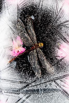 p451m2208815 by Anja Weber-Decker