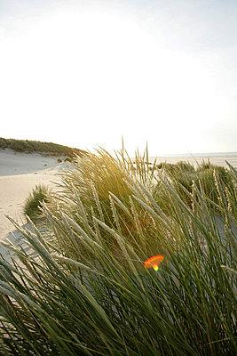 Holländische Küste - p5670686 von ofoulon