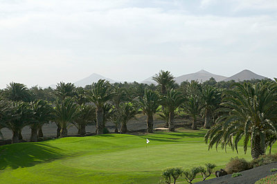 Putting green of golf course surrounded by palm trees - p3013743f by Sven Hagolani