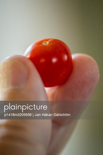 Miniature tomato - p1418m2209938 by Jan Håkan Dahlström