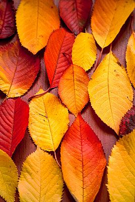 Herbstblätter - p1248m1185566 von miguel sobreira