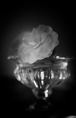 Blumenarrangement - p1371m2090216 von virginie perocheau