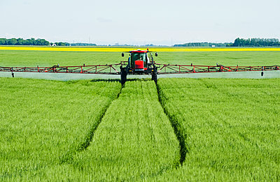 A high clearance sprayer gives a ground chemical application of fungicide to mid-growth wheat, near Dugald; Manitoba, Canada - p442m2111530 by Dave Reede