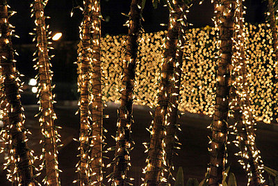 christmas lights on trunks and hedges - p6640077 by Yom Lam