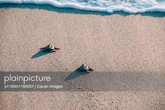 p1166m1183057 von Cavan Images