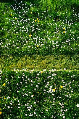 Spur des Rasenmähers im Gras - p1053m2163934 von Joern Rynio