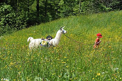 Alpaca Trekking - p1354m2288124 by Kaiser