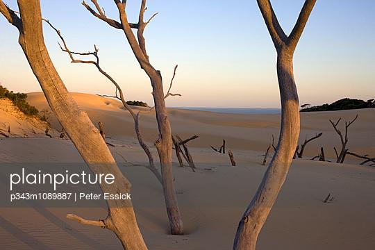 p343m1089887 von Peter Essick photography