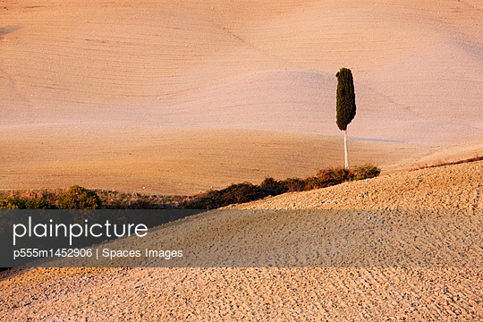 Tree in Field - p555m1452906 by Spaces Images