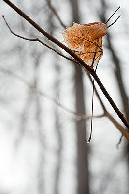 Autumn leaf - p1327m2135179 by elenahelfrecht