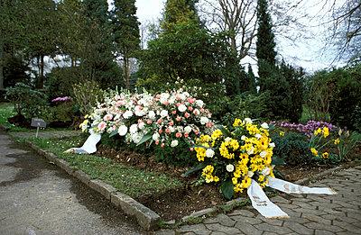 Blumenmeer auf Friedhof - p2370040 von Thordis Rüggeberg