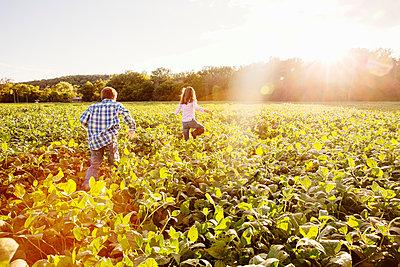 Caucasian children walking in crop field on farm - p555m1413892 by Inti St Clair
