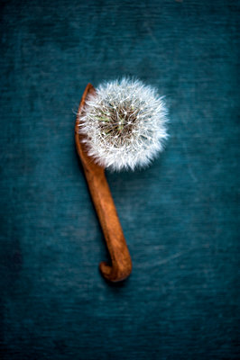 Dandelion clock on a hand-made wooden spoon - p1047m1137557 by Sally Mundy
