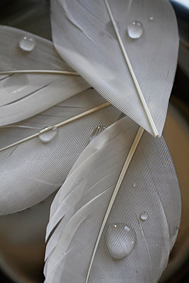 Waterdrops on feathers - p685m1045489 by Lena Kah
