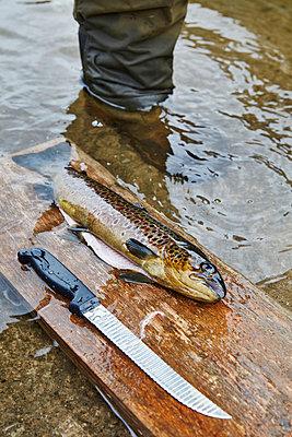 Fisch ausnehmen - p1272m1460812 von Steffen Scheyhing