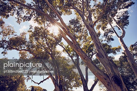 Bäume - p1305m2044729 von Hammerbacher