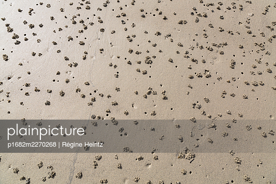 Small holes in the sand made by marine worms - p1682m2270268 by Régine Heintz