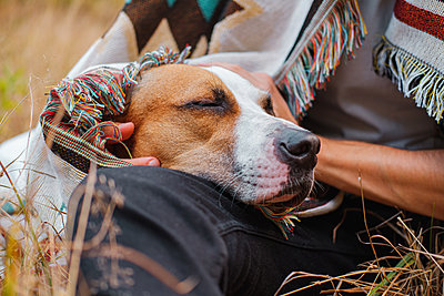Dog with closed eyes in poncho outdoors, hugged by human - p1166m2214609 by Cavan Images