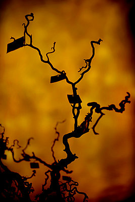 Creepy tree with hanging labels - p1028m2206126 by Jean Marmeisse