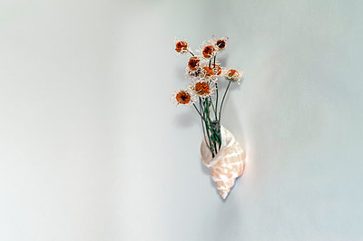 Dried daisies in a shell attached to a wall on light background - p1047m2206291 by Sally Mundy