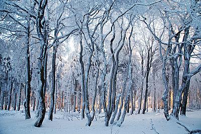 Winter im Taunus - p317m1513125 von Nina Steul