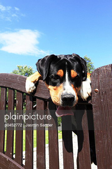 Dog behind the fence - p0452772 by Jasmin Sander