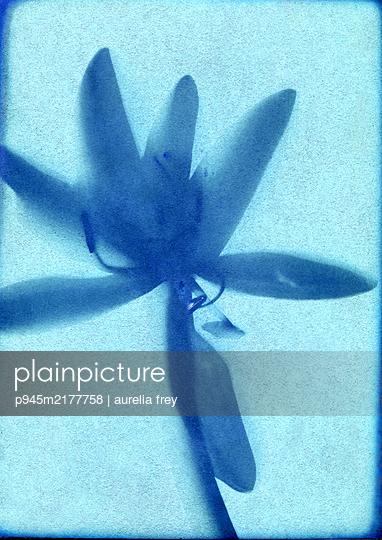 Blue flower - p945m2177758 by aurelia frey