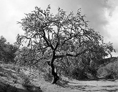 Korkeichen; Guadalupe; Andalusien - p1016m815733 von Jochen Knobloch