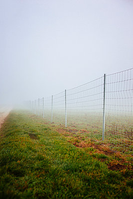 Fence - p946m938931 by Maren Becker