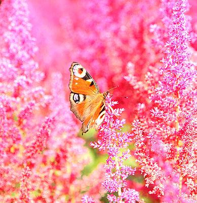Pink - p045m702707 by Jasmin Sander
