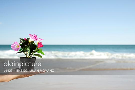 Topfblume mit Ozean im Hintergrund - p1423m1548132 von JUAN MOYANO